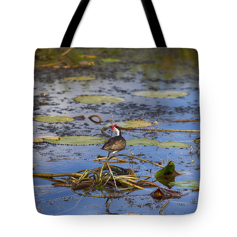 Jesus Christ Bird Tote Bag featuring the photograph Balancing Act V5 by Douglas Barnard