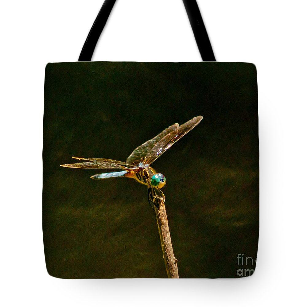 Dragonfly Tote Bag featuring the photograph Balancing Dragonfly by Stephen Whalen