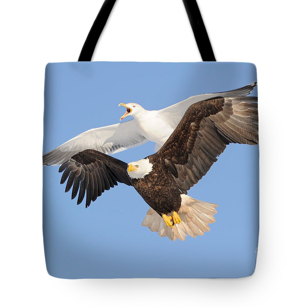 Flight Tote Bag featuring the photograph Bald Eagle And Greater Black-backed Gull by Scott Linstead