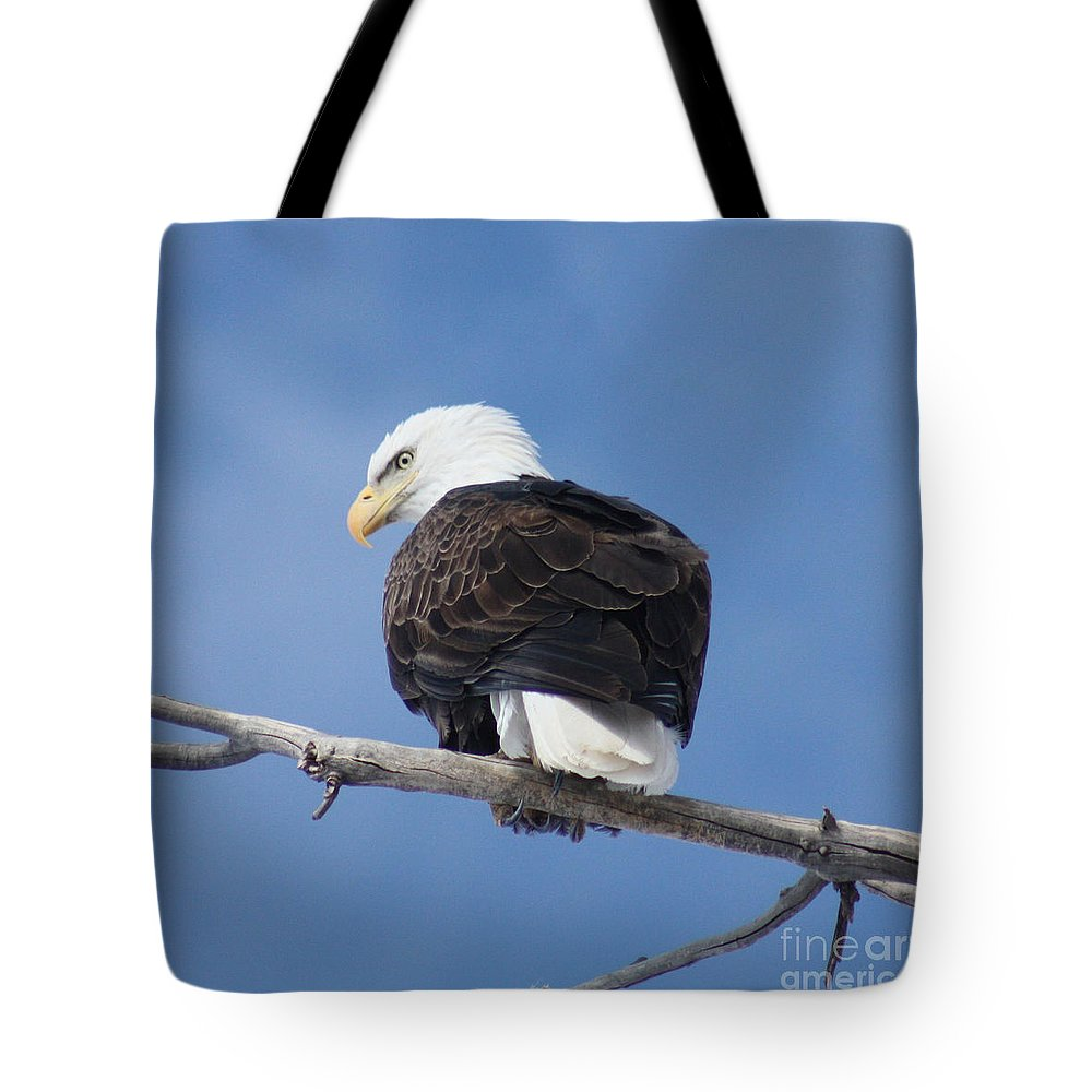 Bald Eagle Tote Bag featuring the photograph Bald Eagle by Brandi Maher
