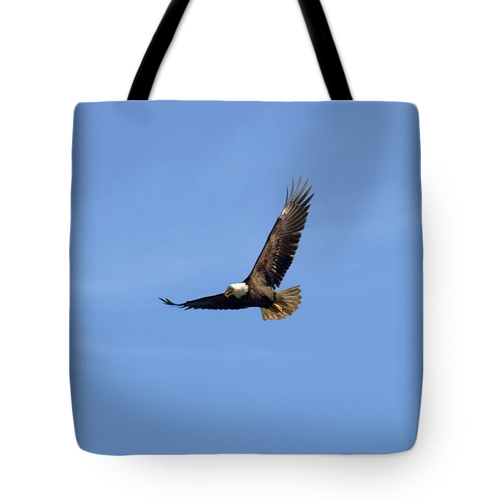 Eagle Tote Bag featuring the photograph Bald Eagle Flying In The Blue Sky by Jessica Foster