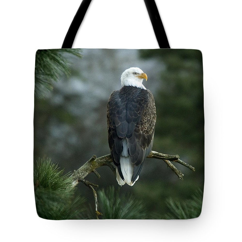 Bald Eagle Tote Bag featuring the photograph Bald Eagle in Tree by Paul DeRocker