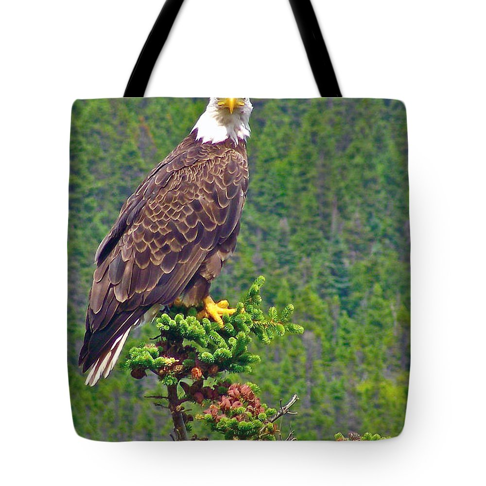 Bald Eagle Near Trinity Tote Bag featuring the photograph Bald Eagle Near Trinity-newfoundland by Ruth Hager