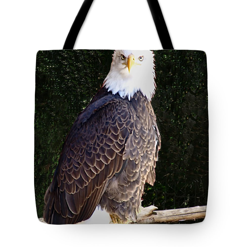 Janet Ashworth Tote Bag featuring the mixed media Bald Eagle Two by Janet Ashworth