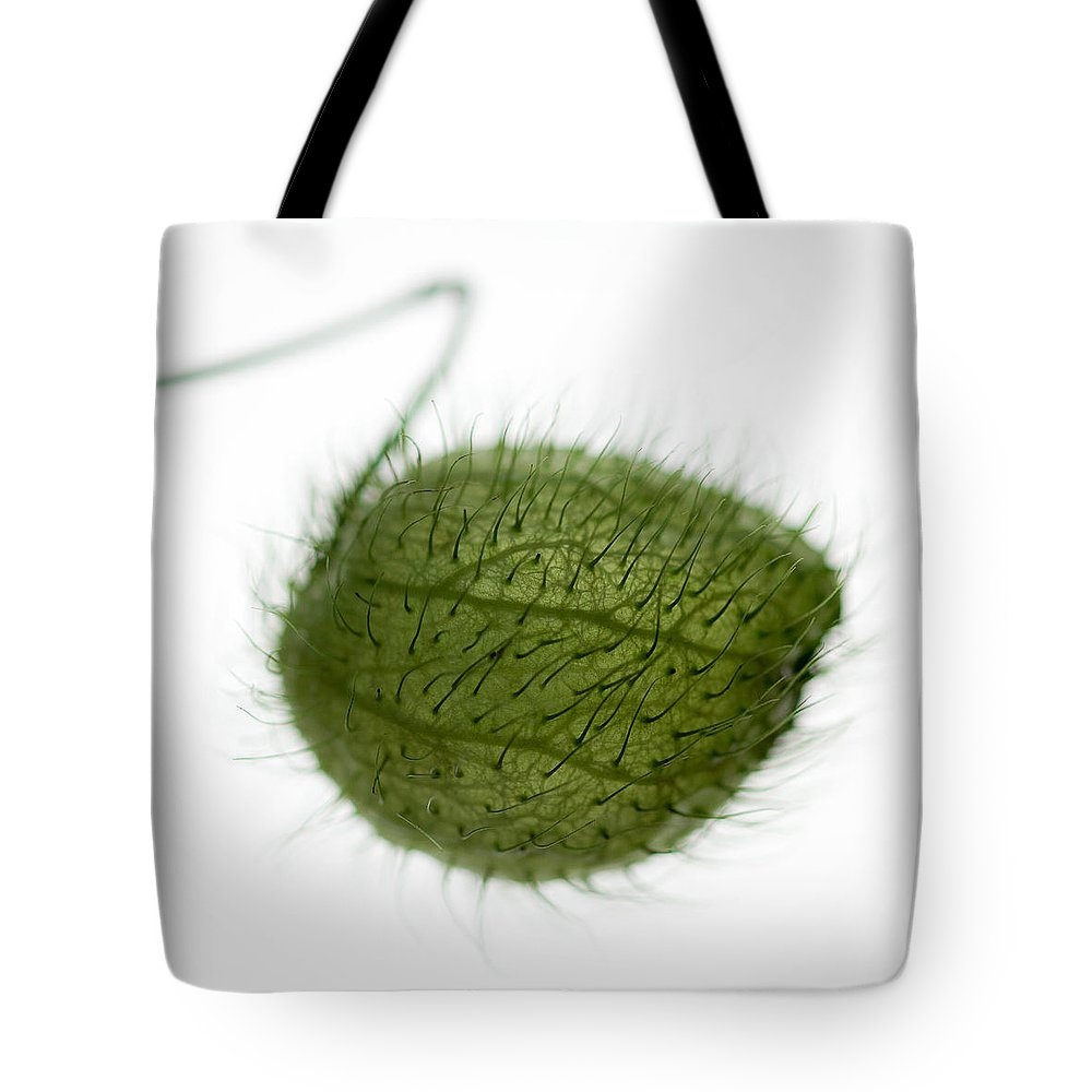 Balloon Plant Tote Bag featuring the photograph Balloon Plant by Dave Bowman