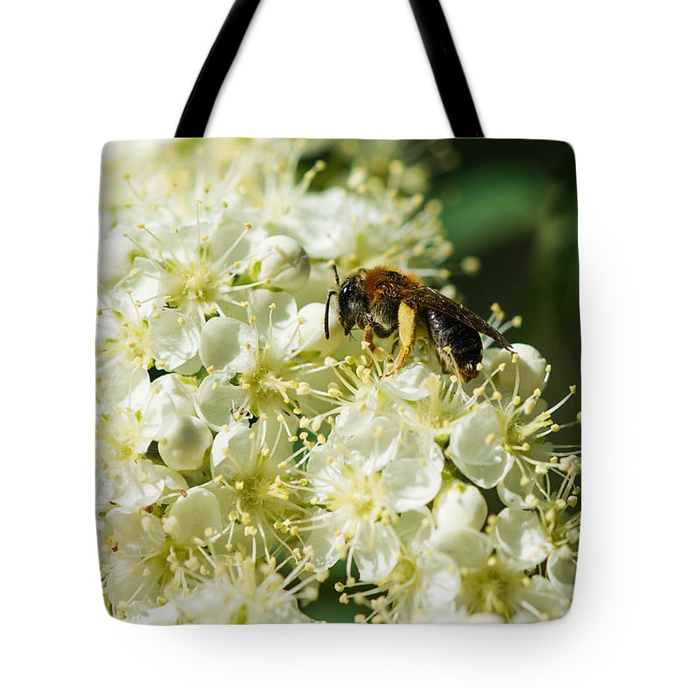 Animal Tote Bag featuring the photograph Banquet by Alexander Senin
