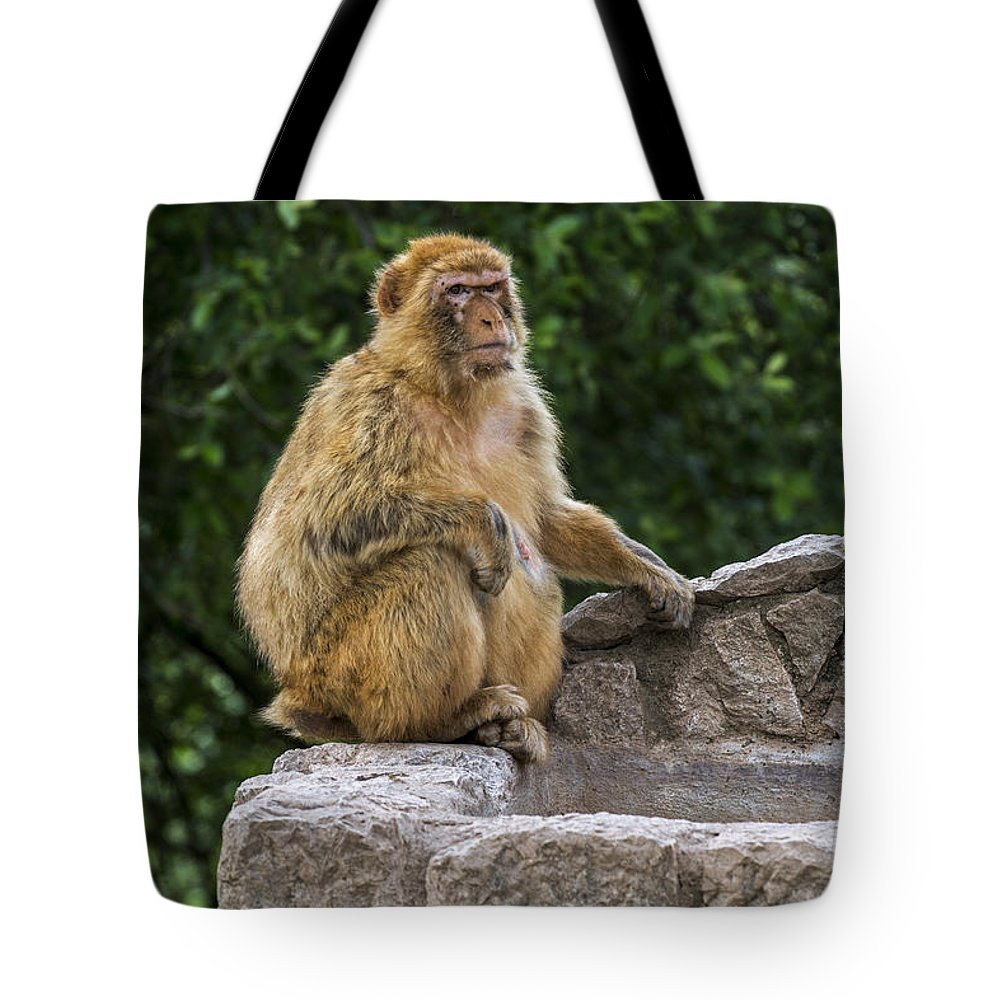 Barbary Macaque Tote Bag featuring the photograph Barbary Macaque by Arterra Picture Library