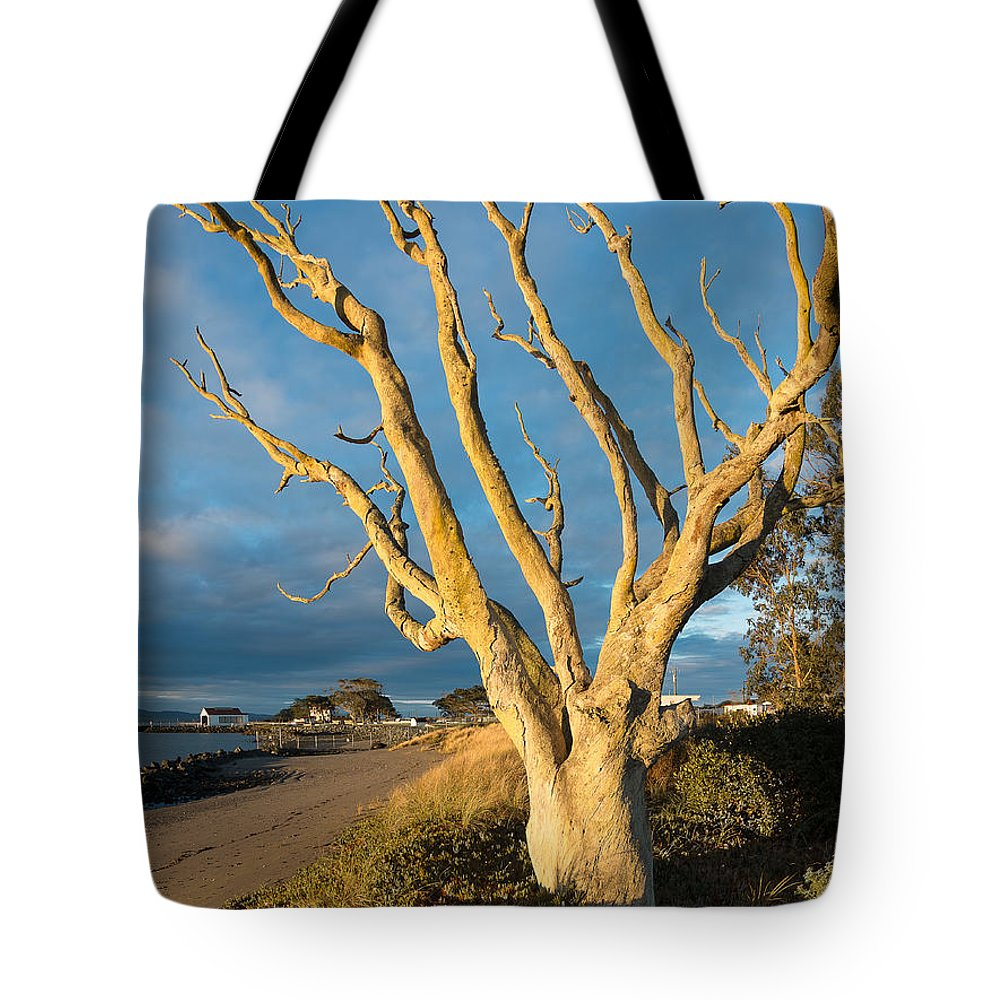 Humboldt Bay Tote Bag featuring the photograph Bare Tree On The Spit by Greg Nyquist