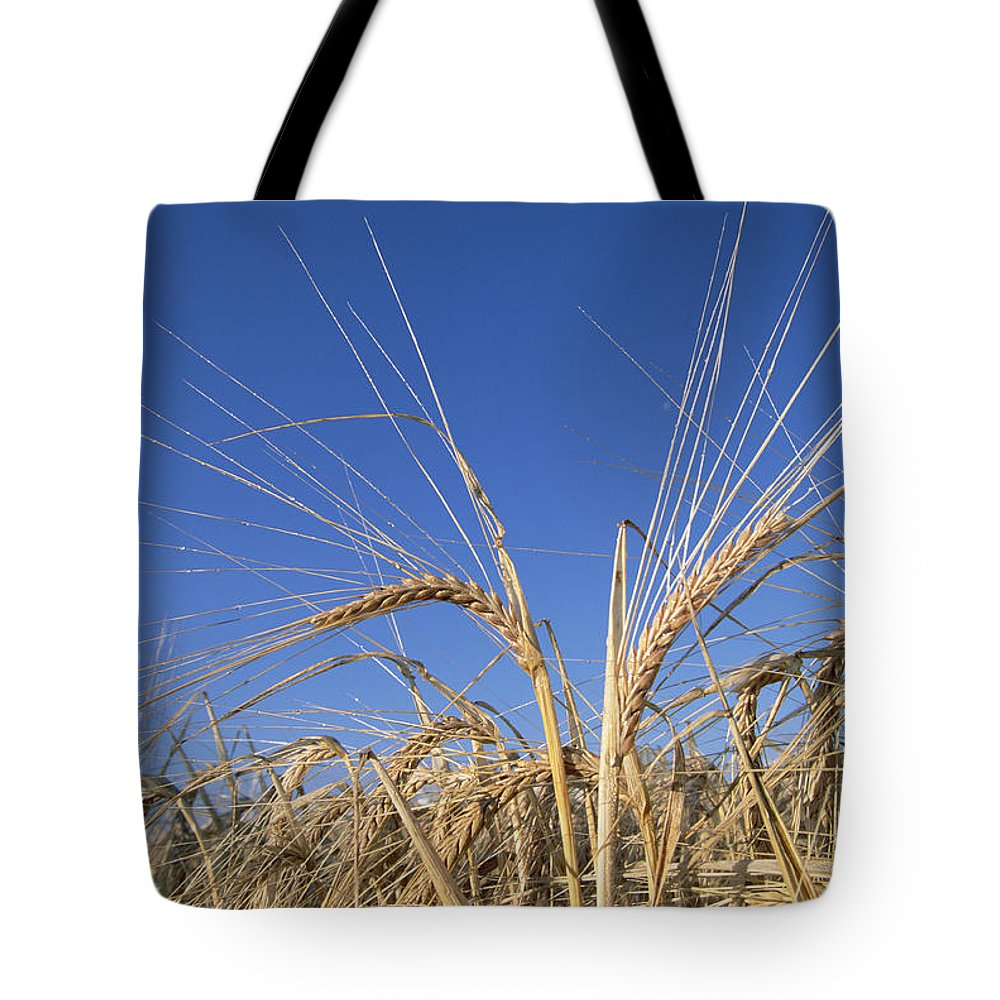 Agriculture Tote Bag featuring the photograph Barley Field Showing Heads Of Grain by Konrad Wothe