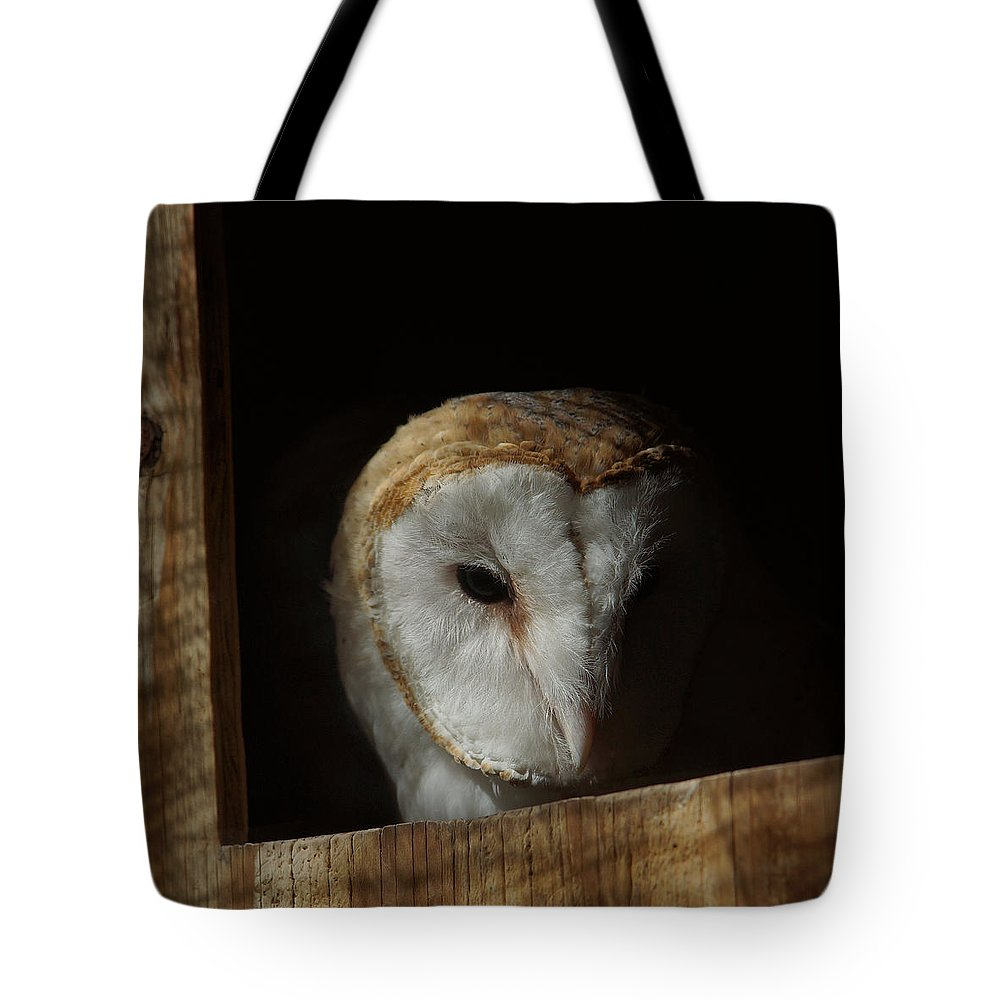 Barn Owl 5 Tote Bag featuring the photograph Barn Owl 5 by Ernie Echols