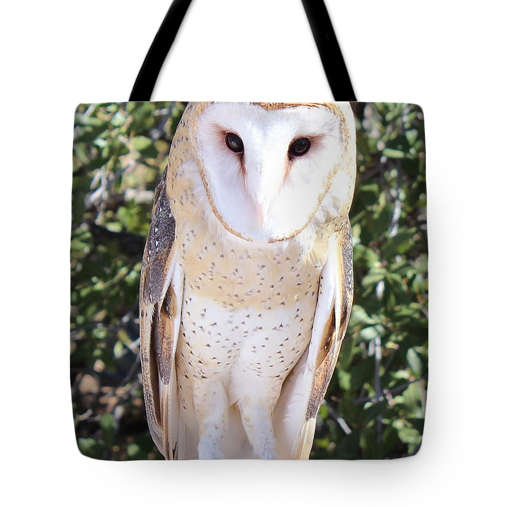 Barn Owl Tote Bag featuring the photograph Barn Owl by Kume Bryant