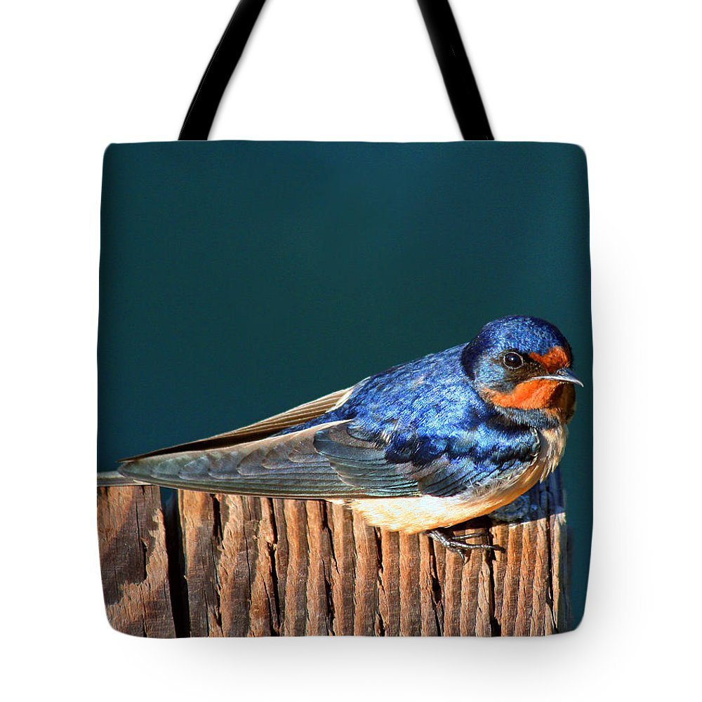 Swallow Tote Bag featuring the photograph Barn Swallow Perching by Bob and Jan Shriner