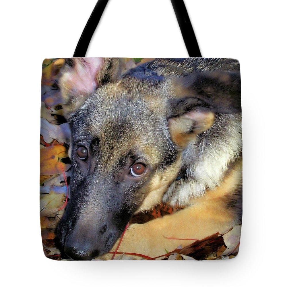 Autumn Tote Bag featuring the photograph Baron In The Leaves by Karol Livote