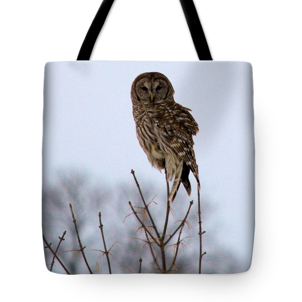 Owl Tote Bag featuring the photograph Barred Owl by Bonfire Photography