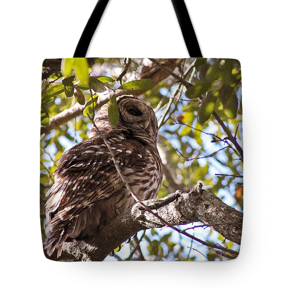 Animal Tote Bag featuring the photograph Barred Owl by Jessica Brown
