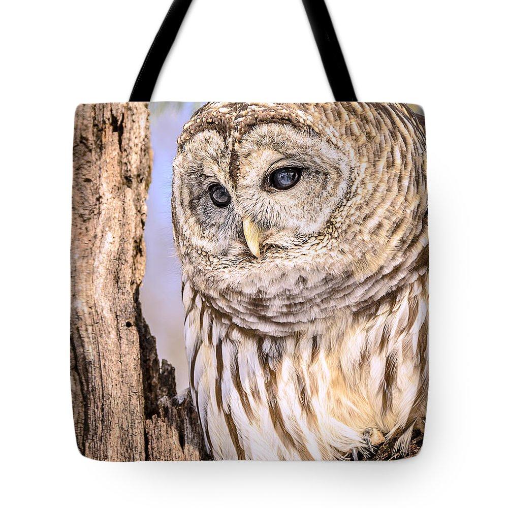 Barred Owl Tote Bag featuring the photograph Barred Owl Watch by LeeAnn McLaneGoetz McLaneGoetzStudioLLCcom