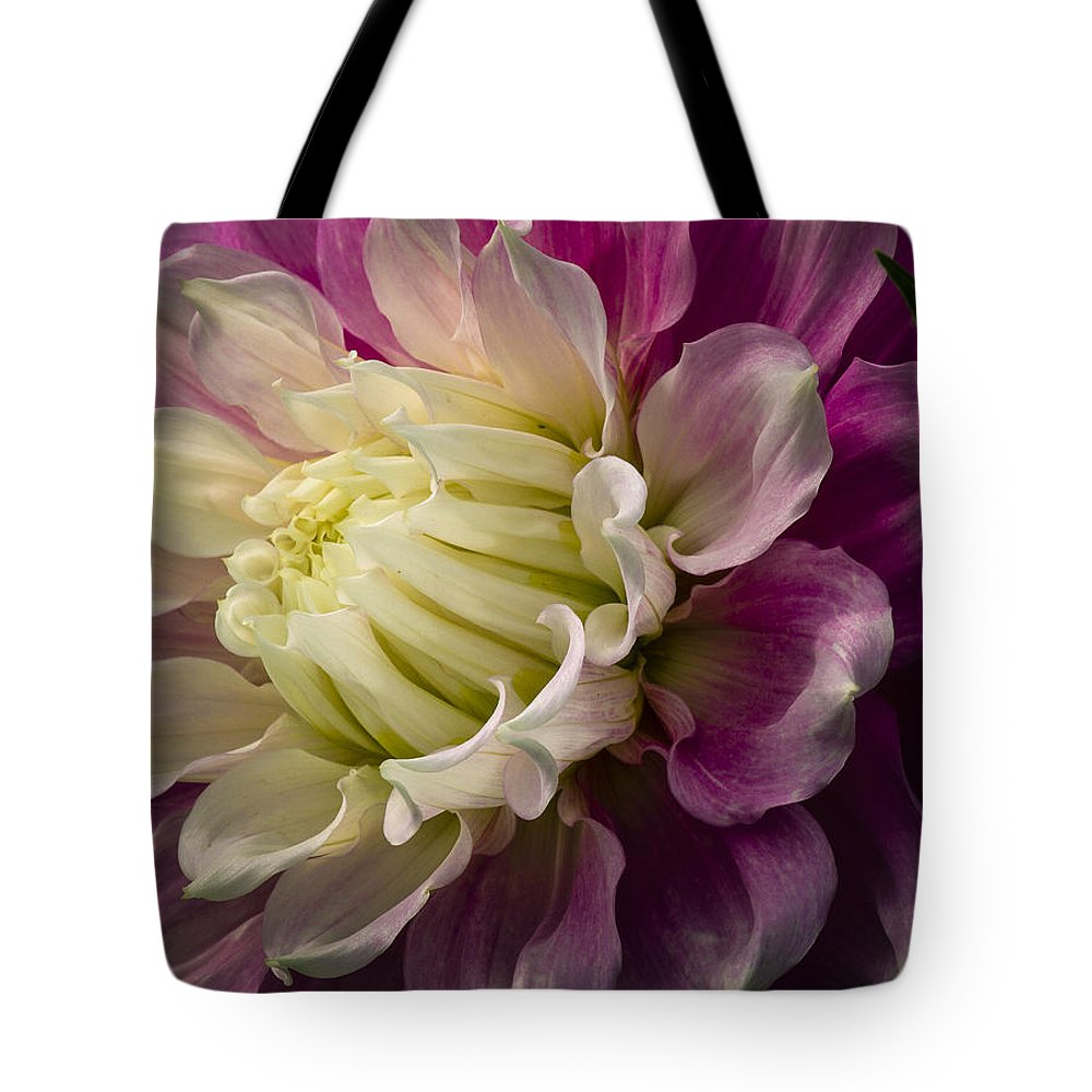 Dahlia Tote Bag featuring the photograph Bashful Dahlia by Jean Noren