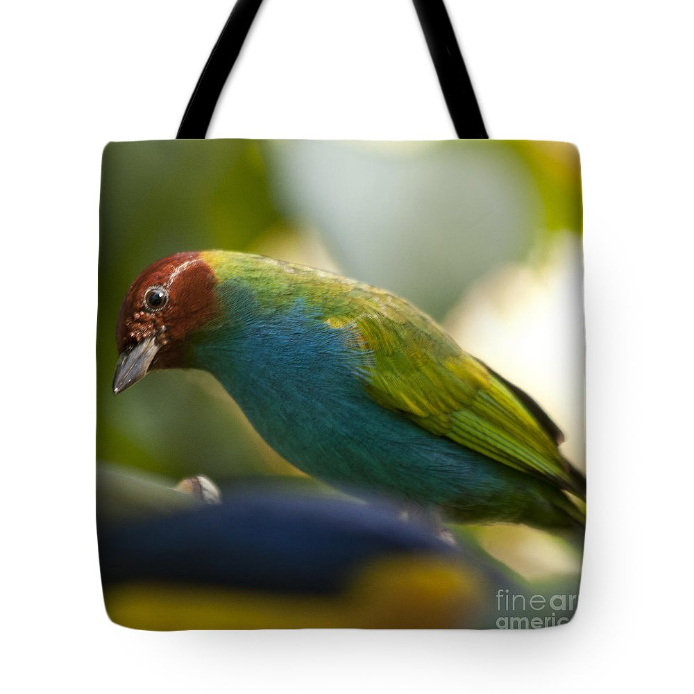 Tanager Tote Bag featuring the photograph Bay-headed Tanager - Tangara Gyrola by Heiko Koehrer-Wagner
