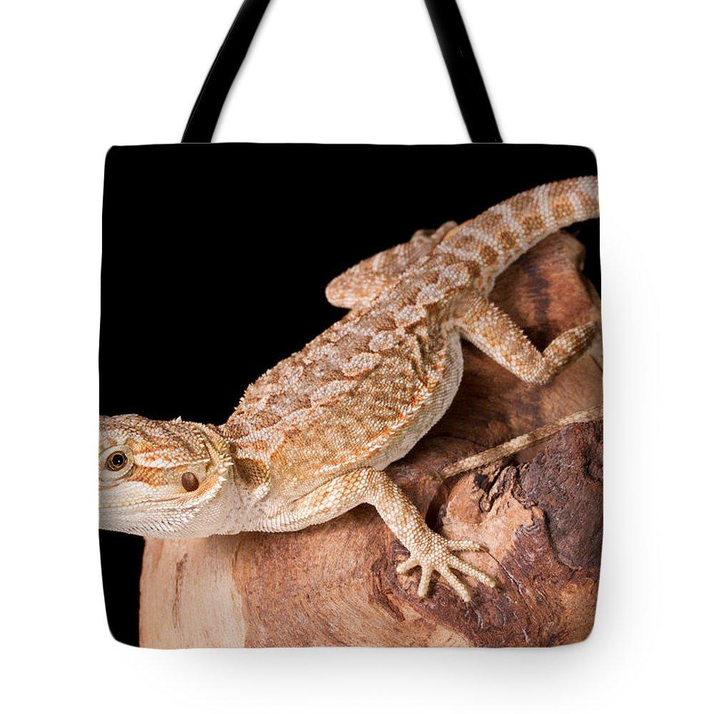 Bearded Dragon Pagona Tote Bag
