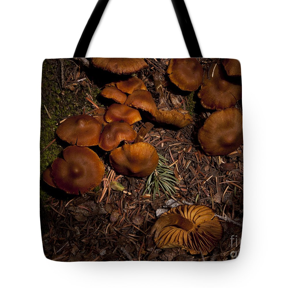 Beartooth Mountain Mushrooms Tote Bag featuring the photograph Beartooth Mountain Mushrooms  #3661 by J L Woody Wooden