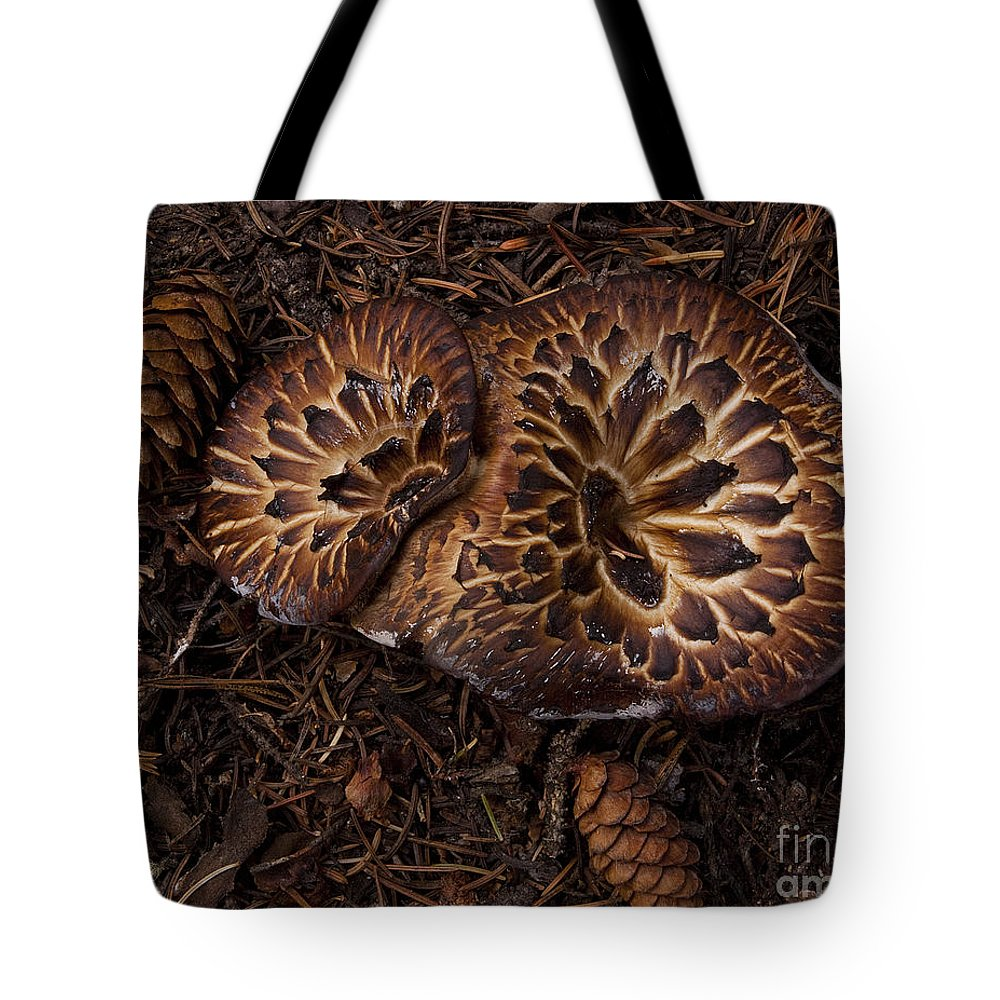 Mountain Mushrooms Tote Bag featuring the photograph Beartooth Mountain Mushrooms  #9142 by J L Woody Wooden