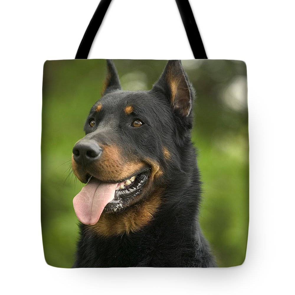 Beauceron Tote Bag featuring the photograph Beauceron Dog by Jean-Michel Labat