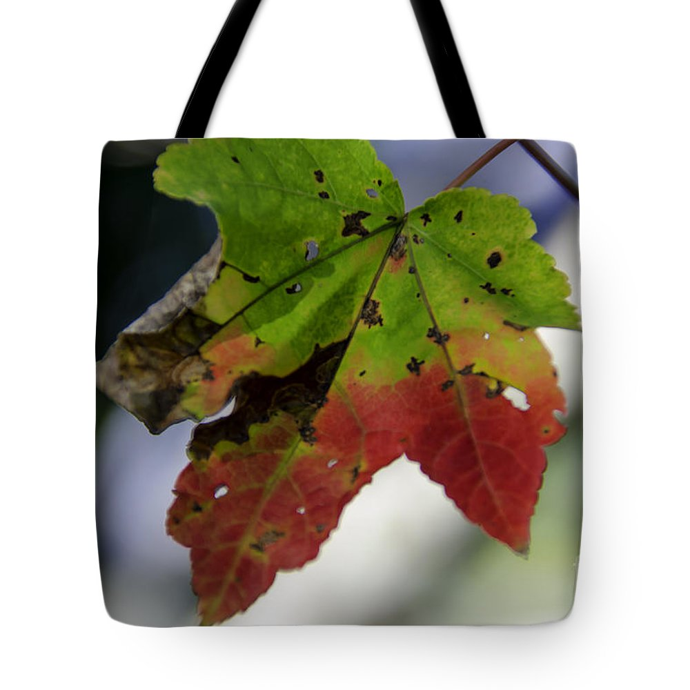 Maple Leaf Tote Bag featuring the photograph Beautiful Maple Leaf by Dale Powell