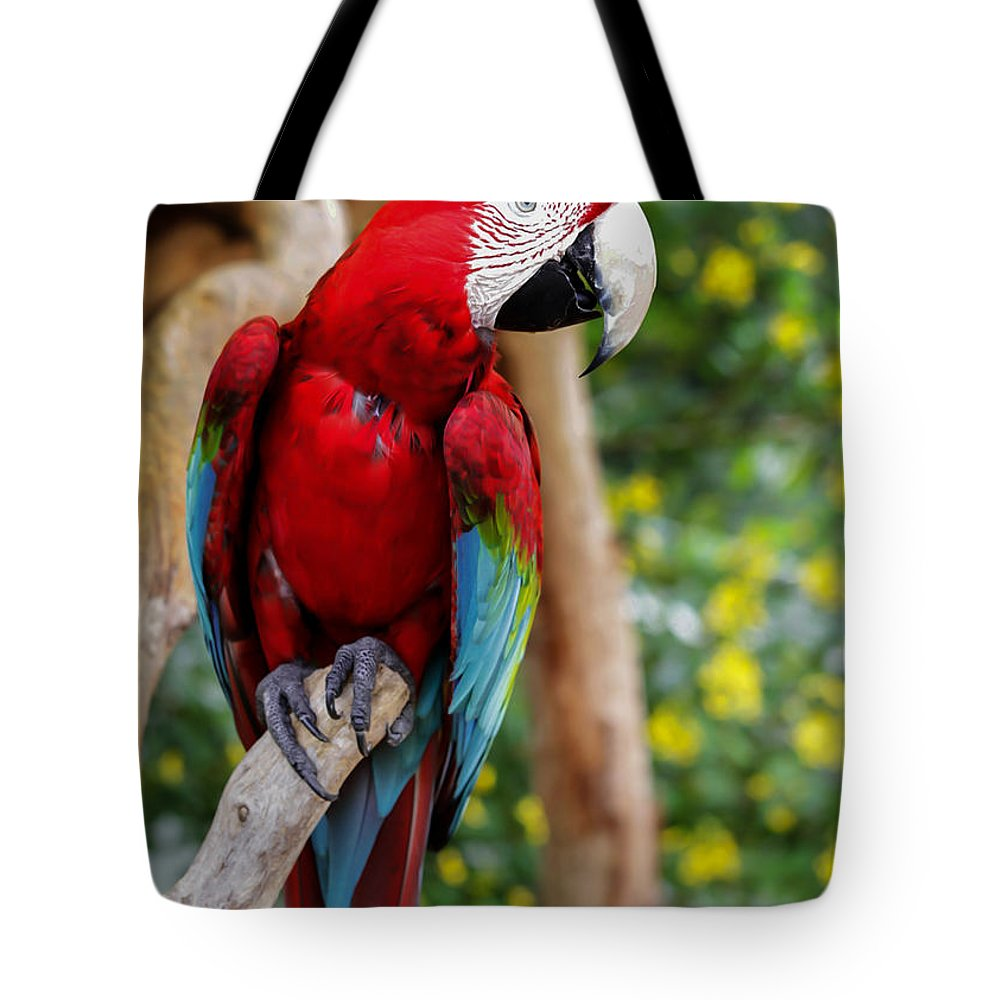 Animal Tote Bag featuring the photograph Beautiful Mccaw by Sabrina L Ryan