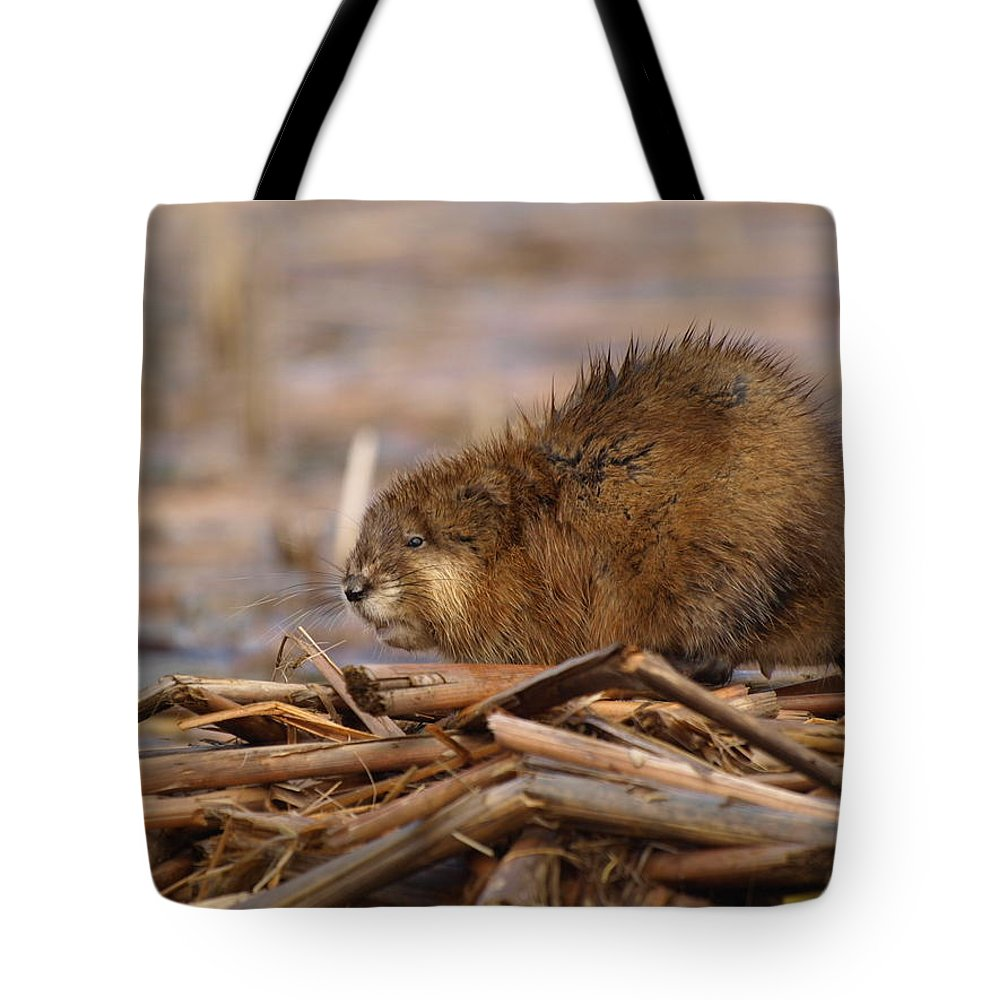 Nature Tote Bag featuring the photograph Beautiful Muskrat by James Peterson
