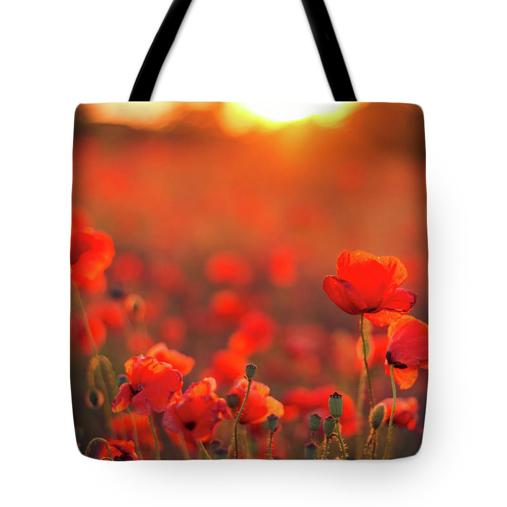 Tranquility Tote Bag featuring the photograph Beautiful Sunset Over Poppy Field by Levente Bodo