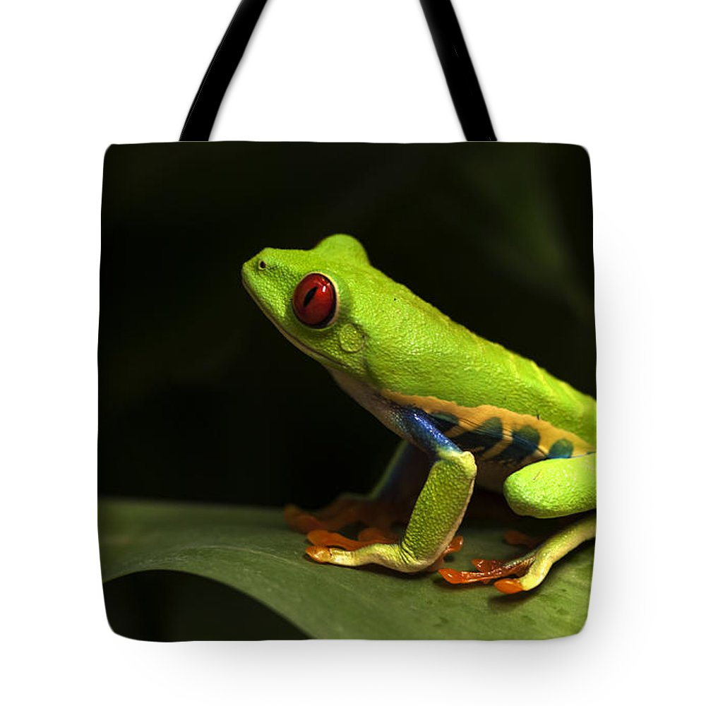 Frog Tote Bag featuring the photograph Beauty Of Tree Frogs Costa Rica 1 by Bob Christopher