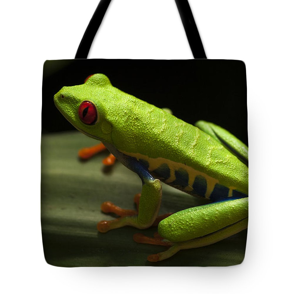 Frog Tote Bag featuring the photograph Beauty Of Tree Frogs Costa Rica 2 by Bob Christopher