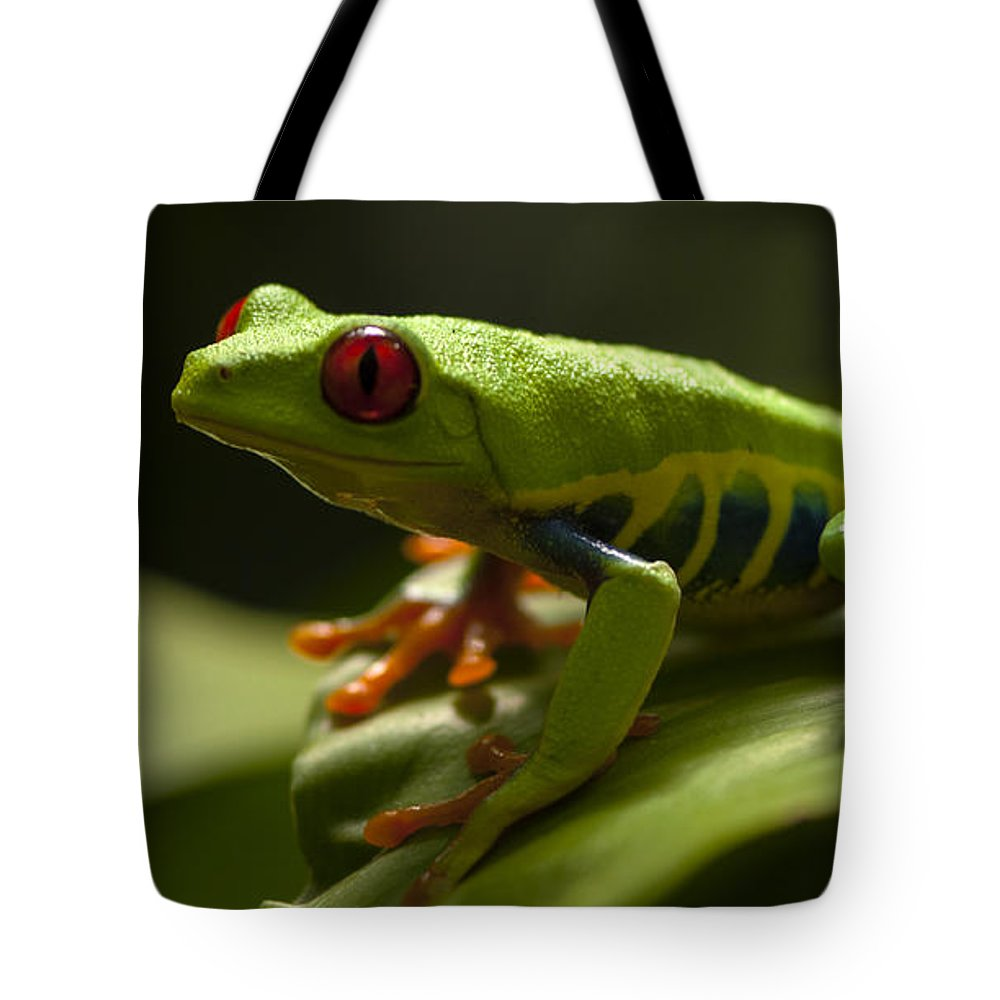 Frog Tote Bag featuring the photograph Beauty Of Tree Frogs Costa Rica 3 by Bob Christopher