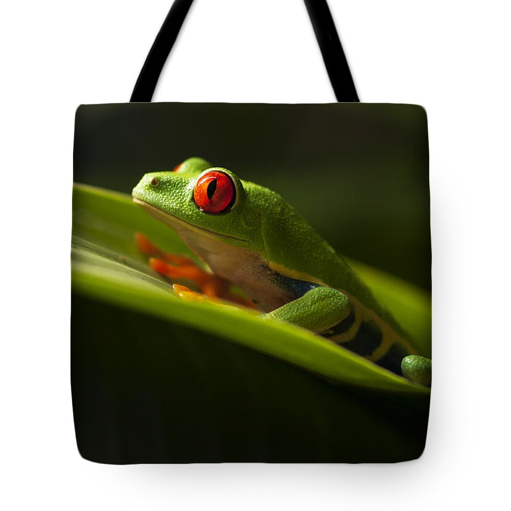 Frog Tote Bag featuring the photograph Beauty Of Tree Frogs Costa Rica 7 by Bob Christopher