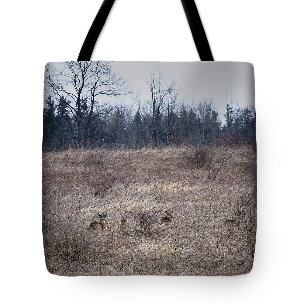 Whitetail Tote Bag featuring the photograph Bedded Whitetail Deer by Roger Bailey