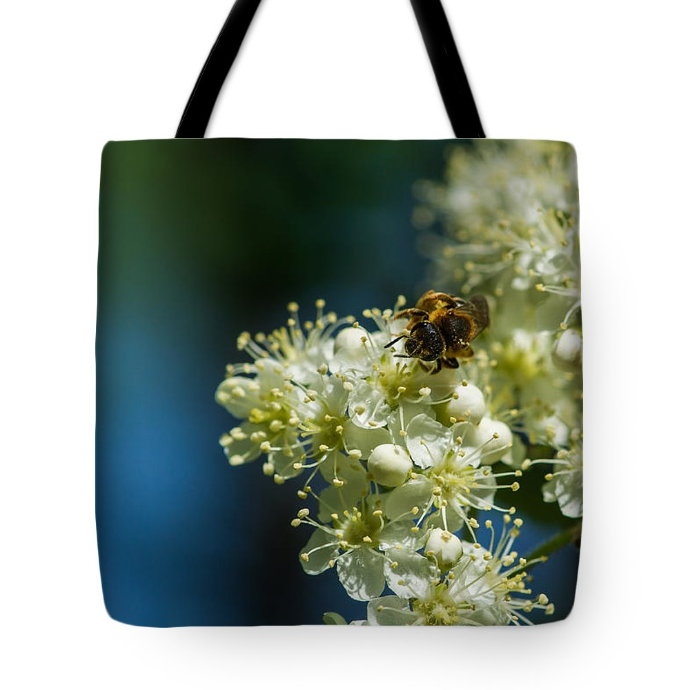 Animal Tote Bag featuring the photograph Bee On A Rowan Flower - Featured 3 by Alexander Senin