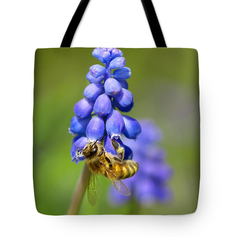 Bee Tote Bag featuring the photograph Bee On Grape Hyacinth by Sharon Talson