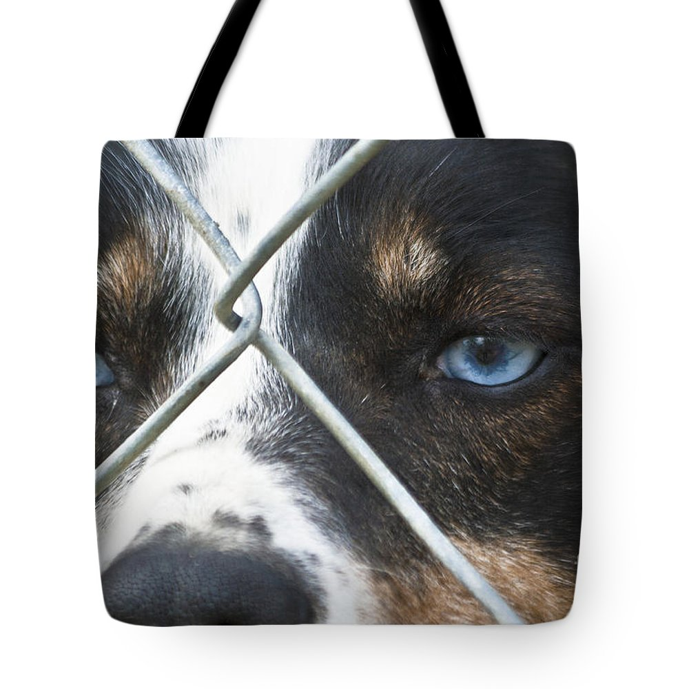 Heiko Tote Bag featuring the photograph Behind Fences by Heiko Koehrer-Wagner