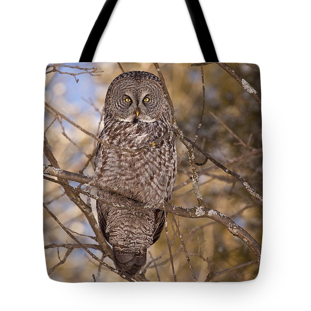 Owl Tote Bag featuring the photograph Being Observed by Eunice Gibb