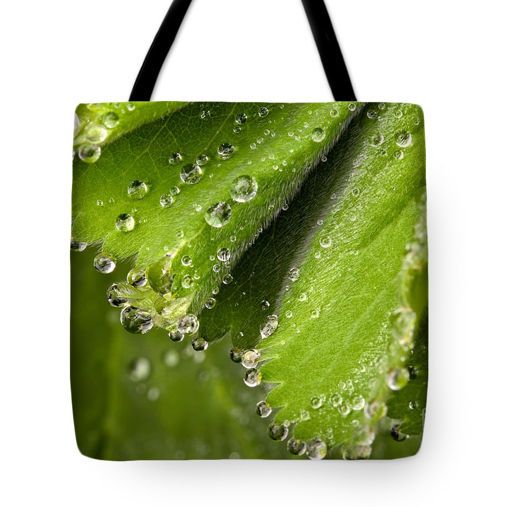 Raindrops Tote Bag featuring the photograph Bejewelled by Mary Smyth