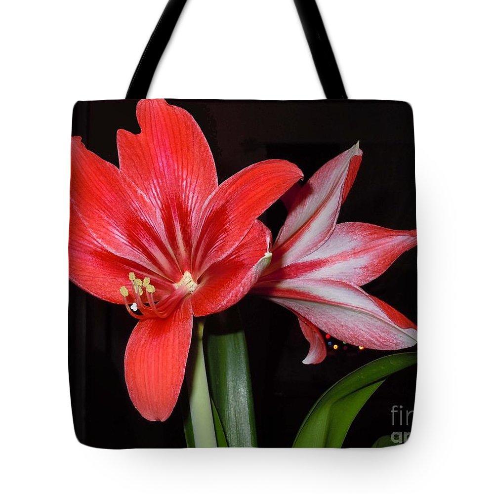 Amaryllis Belladonna Tote Bag featuring the photograph Belladonna by Patricia Blake