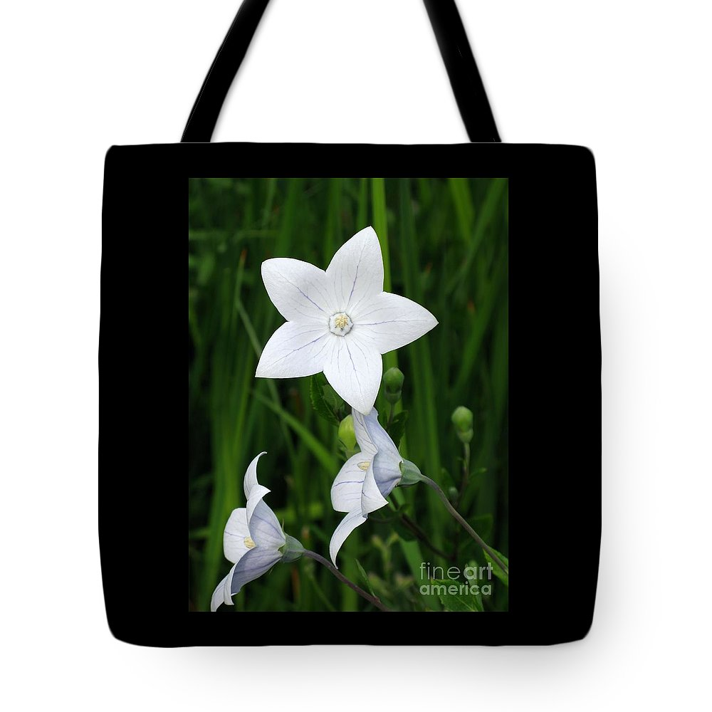 Bellflower Tote Bag featuring the photograph Bellflower - Campanula Carpatica by Ann Horn