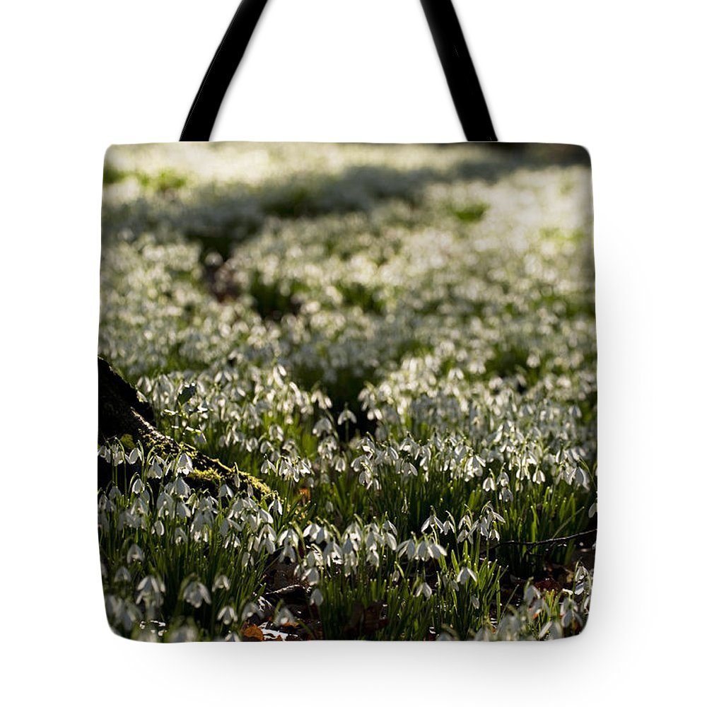 Beneath Tote Bag featuring the photograph Beneath The Big Tree by Anne Gilbert