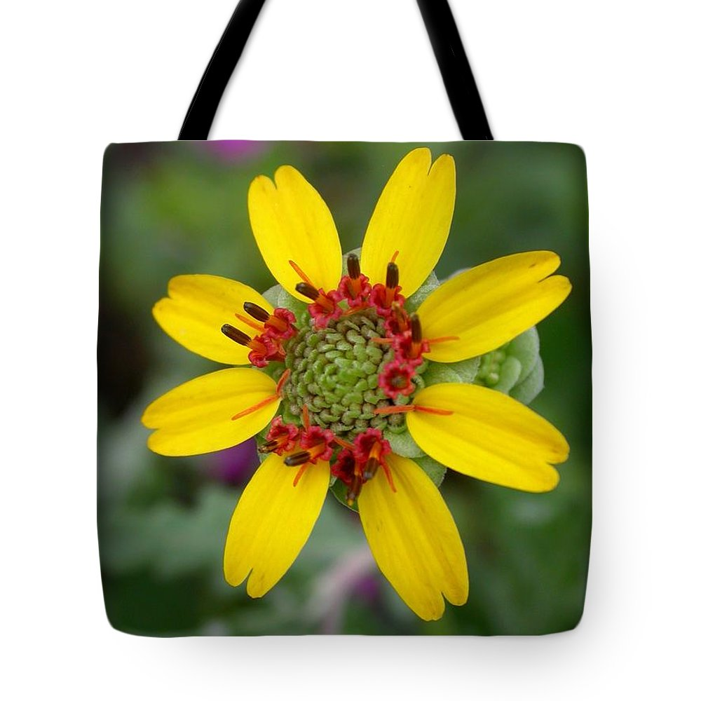 Chocolate Flower Tote Bag featuring the photograph Berlandiera Lyrata by Cynthia Wallentine