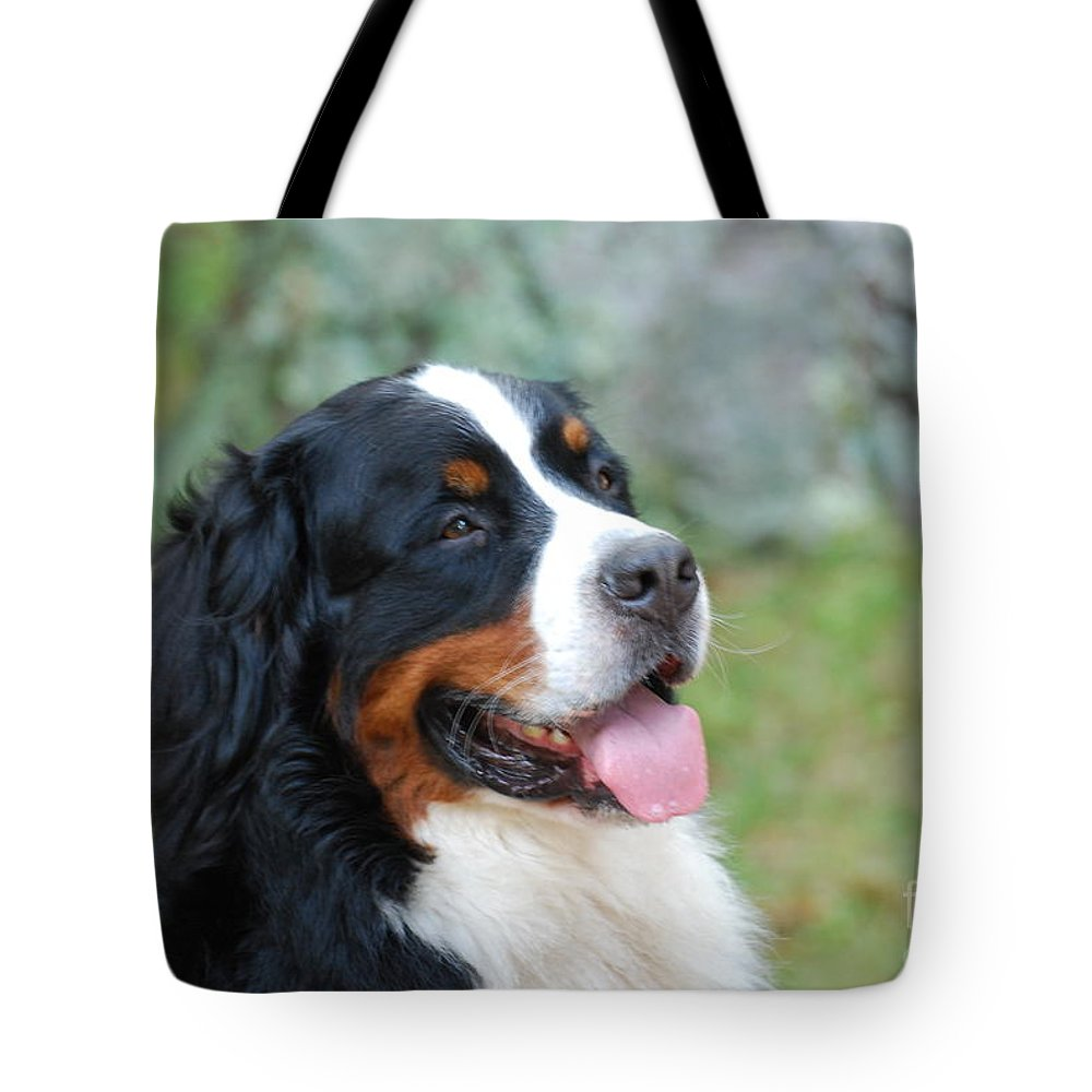 Bernese Mountain Dog Tote Bag featuring the photograph Bernese Mountain Dog Portrait by DejaVu Designs