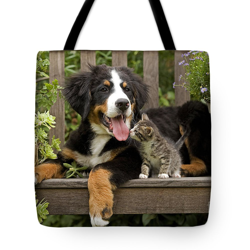 Bernese Mountain Dog Tote Bag featuring the photograph Bernese Mountain Puppy & Kitten by Jean-Michel Labat