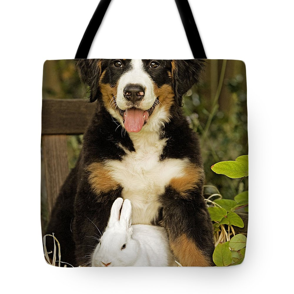 Bernese Mountain Dog Tote Bag featuring the photograph Bernese Mountain Puppy And Rabbit by Jean-Michel Labat