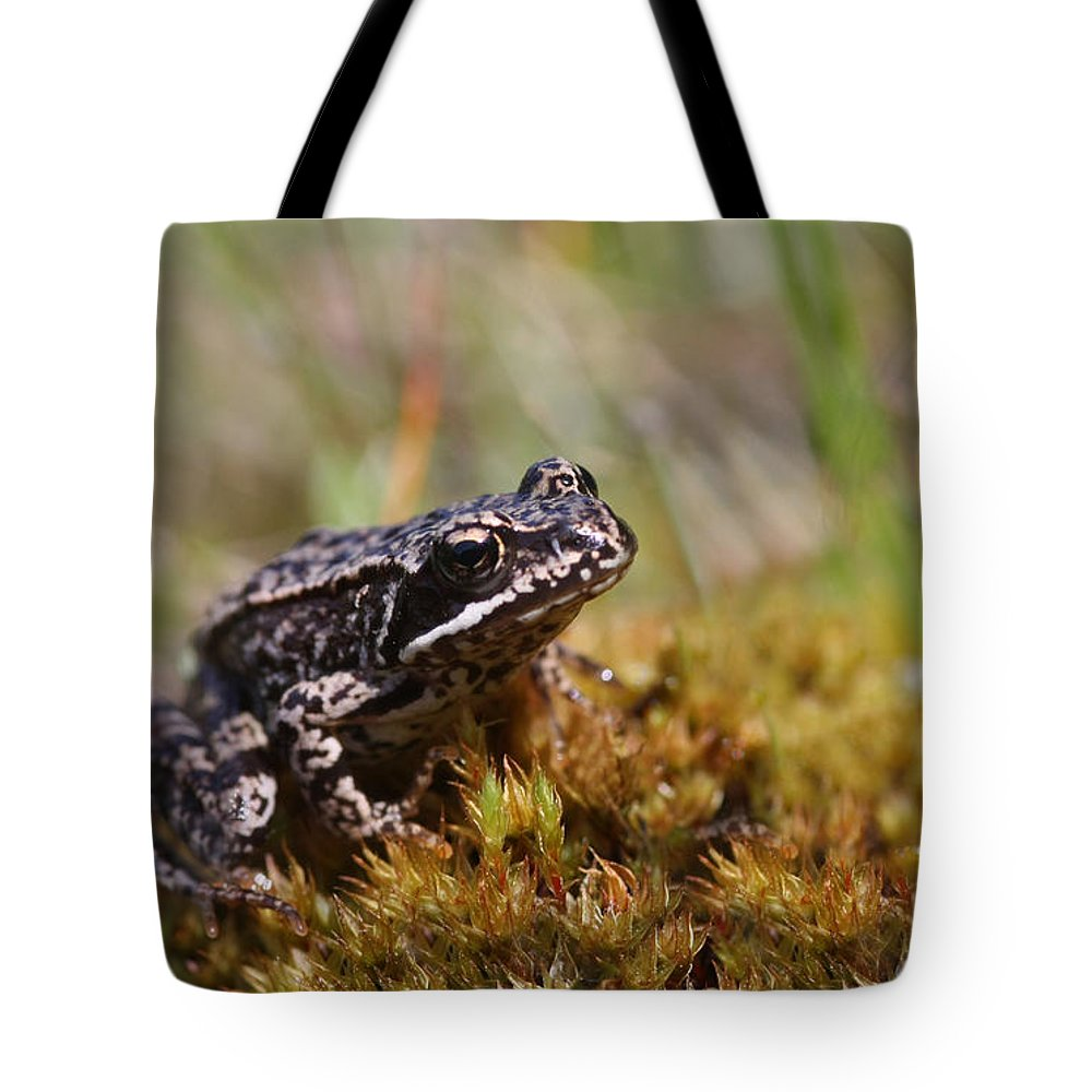 Cute Tote Bag featuring the photograph Beutiful Frog On The Moss by Dreamland Media