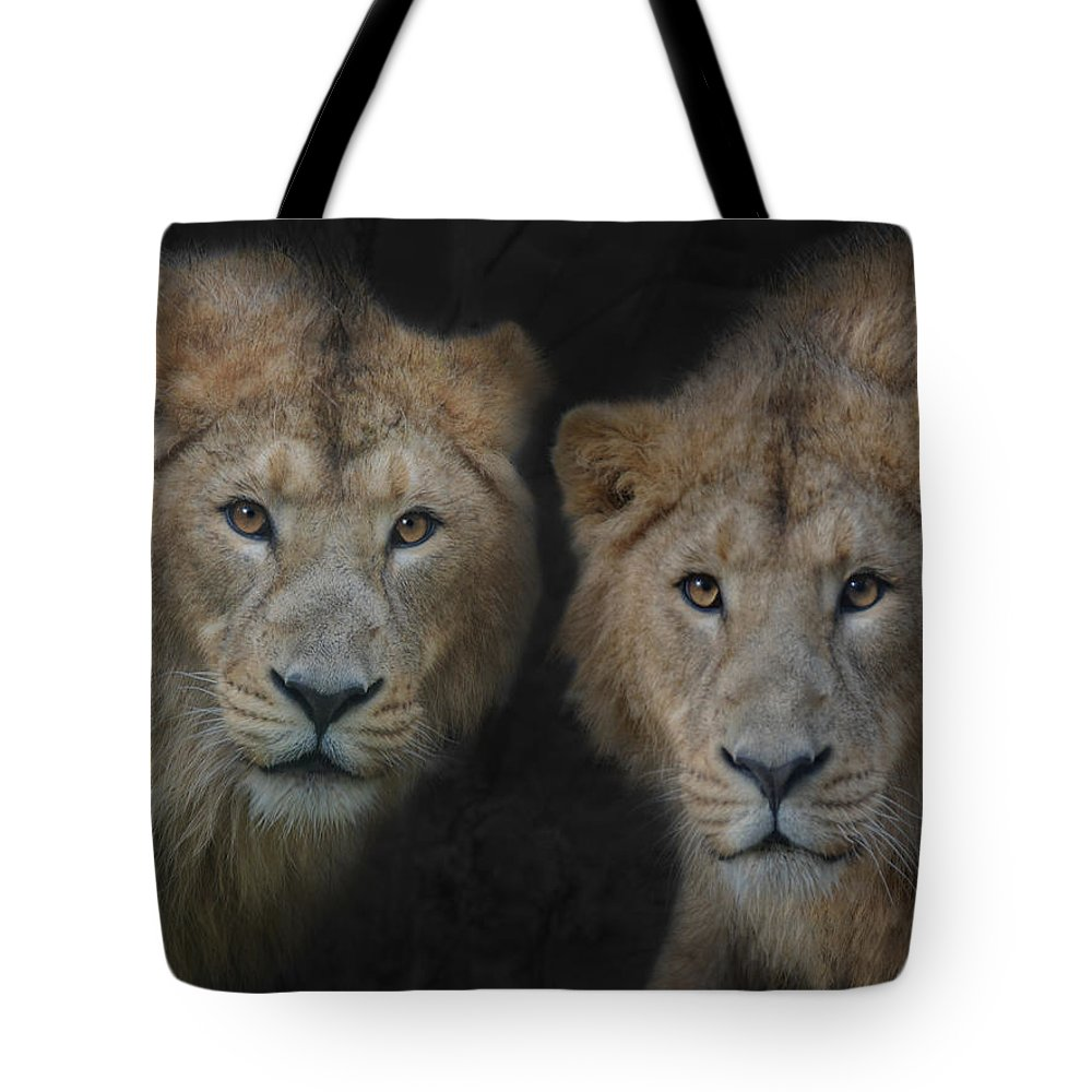 Brothers Tote Bag featuring the photograph Big Brothers by Joachim G Pinkawa