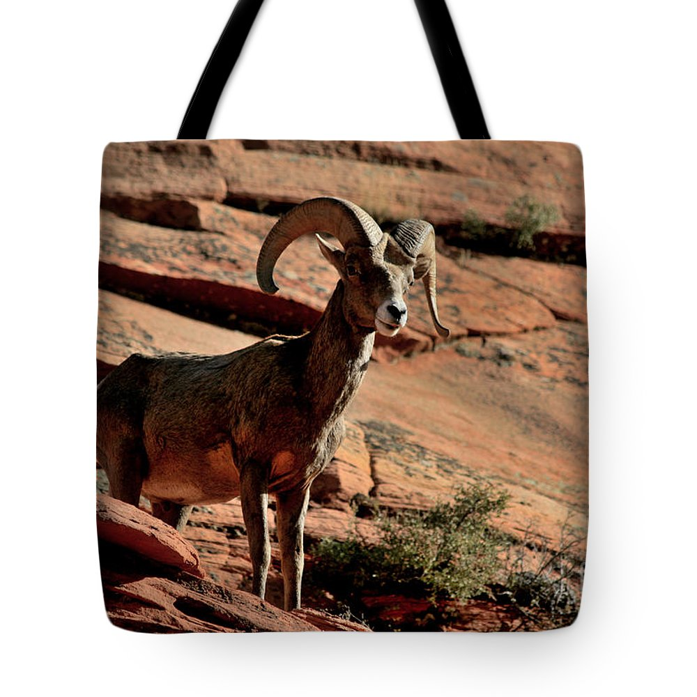 Ram Tote Bag featuring the photograph Big Horn Ram At Zion by Marty Fancy